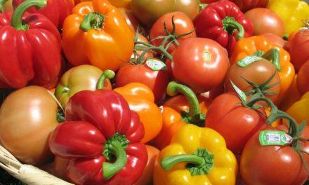 Le poivron et la tomate